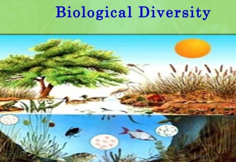 Biological Diversity- CBD